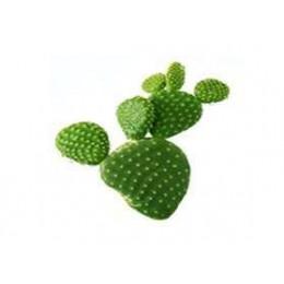 Additif Cactus