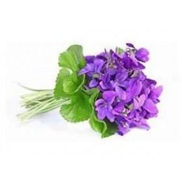 Additif Violette